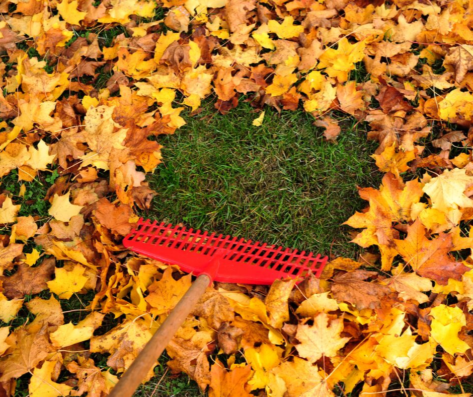 a red rake and fallen leaves