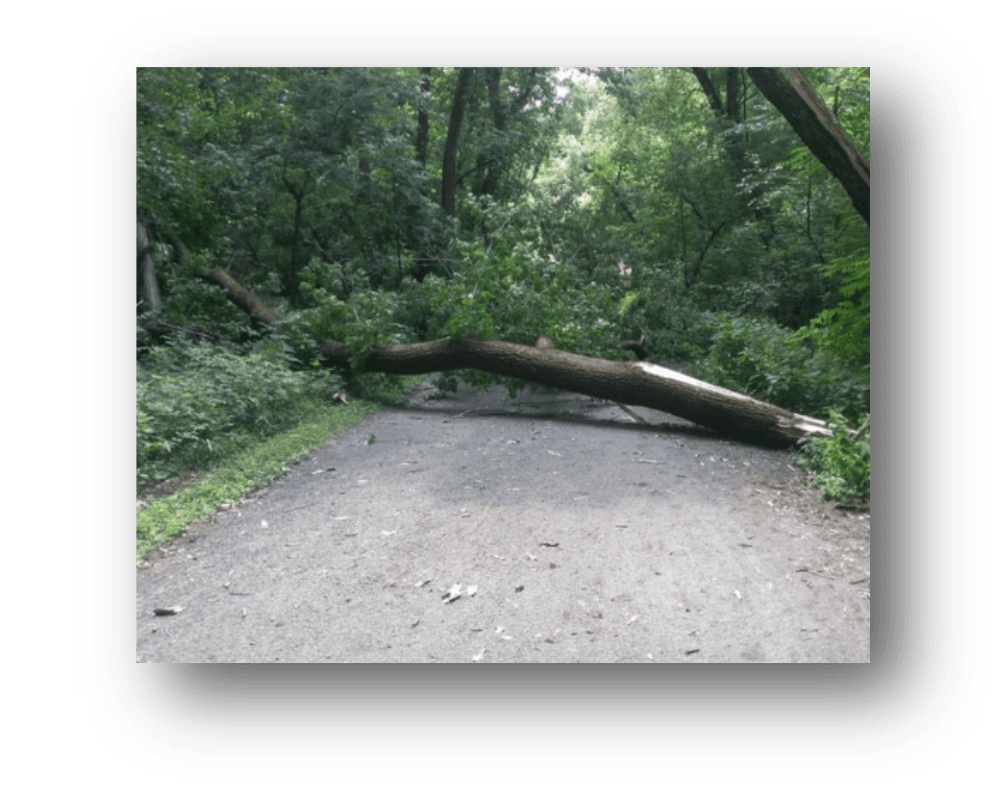 fallen tree on trail