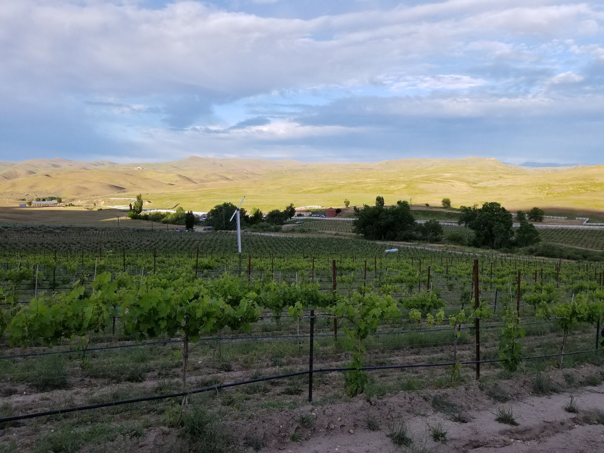 3 Horse Ranch Vineyards